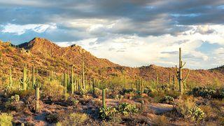 7775 N Lydia Ave, Tucson, AZ 85743