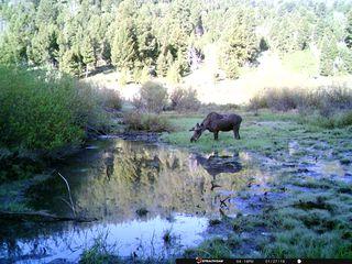 Copper Camp Creek Rd, Butte, MT 59701
