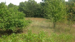 17788 Highway Y, Willow Springs, MO 65793
