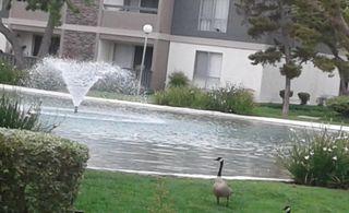 2867 S Fairview St, Santa Ana, CA 92704