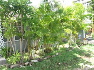 1715 Pensacola St #C, Honolulu, HI 96822